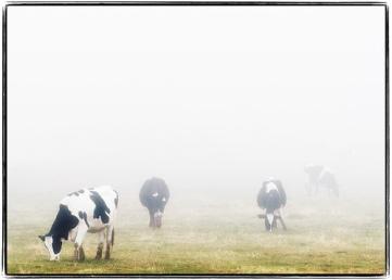 wisconsin_cows1.jpg