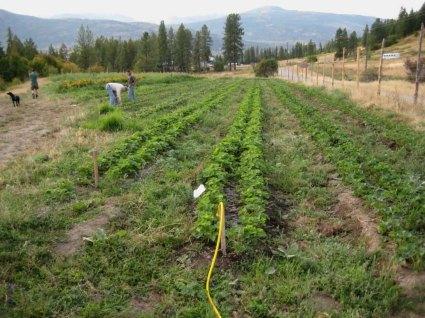 Opportunity Organic Farm On Rickey Creek The