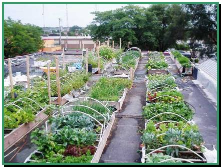Rooftop Gardens in Milwaukee | the irresistible fleet of bicycles