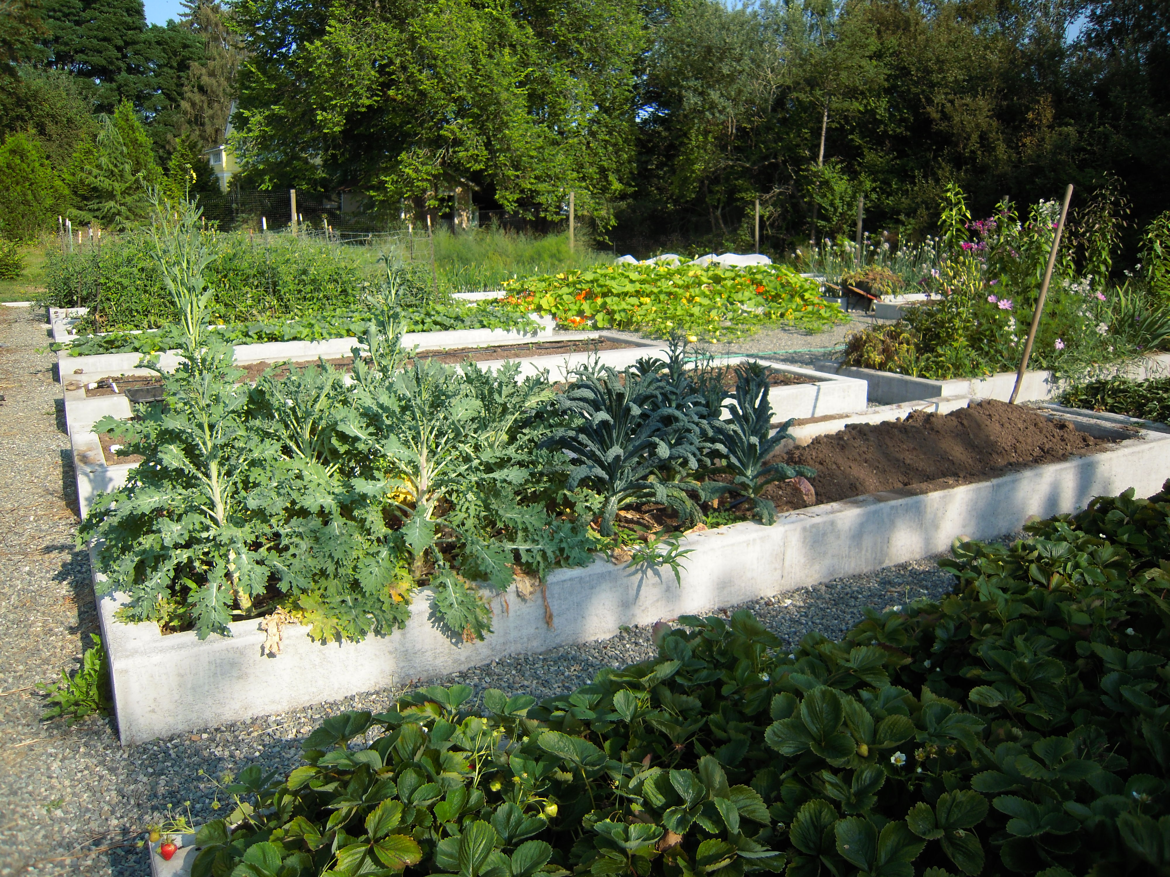 Profitable urban farming ca the irresistible fleet of bicycles - Profitable crops small plots ...