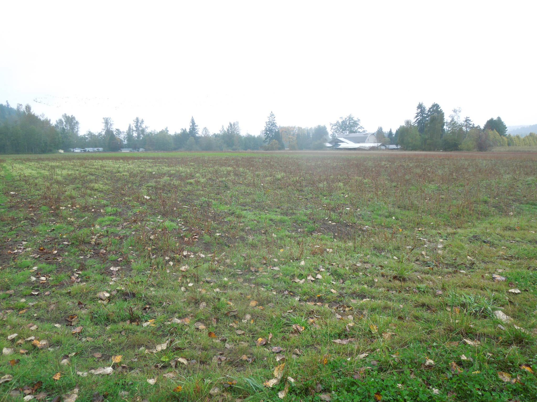 reise farm field