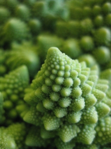 romanesco medium(1)