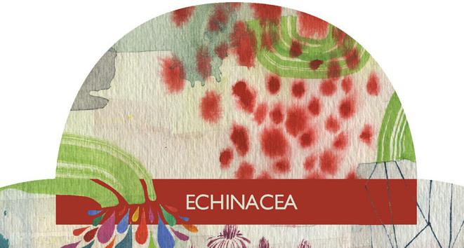 echinacea-sneak-peek