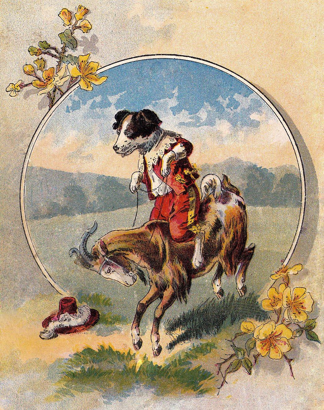 Dog on goat-gfairy