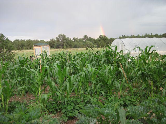 Gulch Farm
