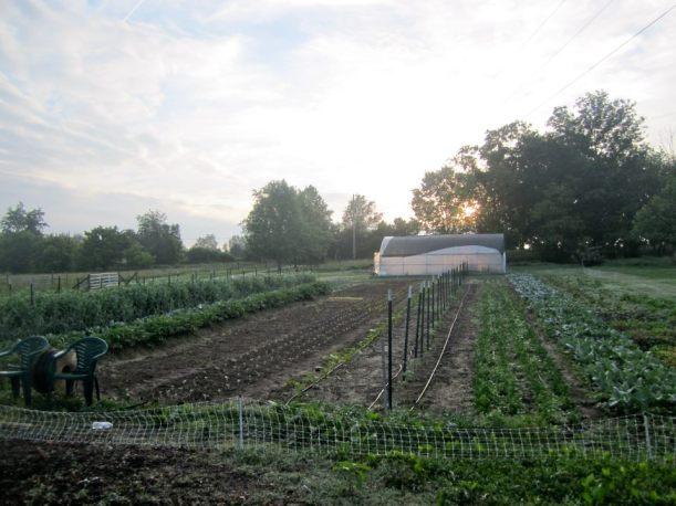 2012 garden 2