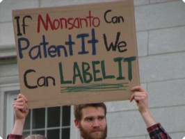 GMO-canvass-campaign-main-img-266x200