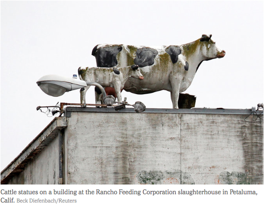 Rancho Feeding Corporation Slaughterhouse