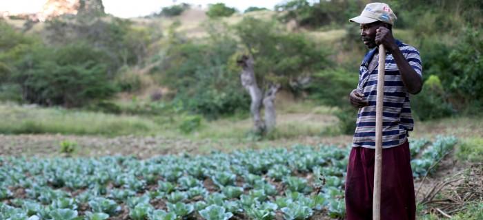 Haitian-farmer_wikimedia_http-farm8.staticflickr.com70146512242389_9b5559a93a_o-700x320