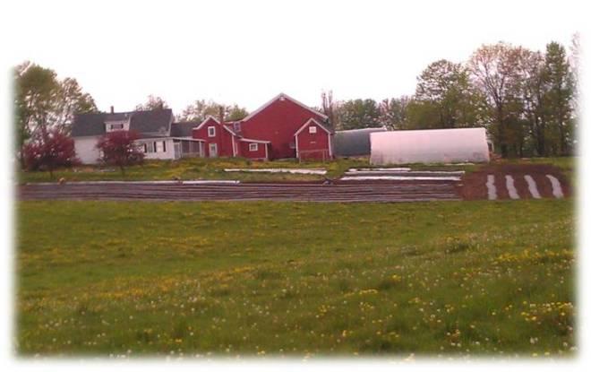 farm for sale1