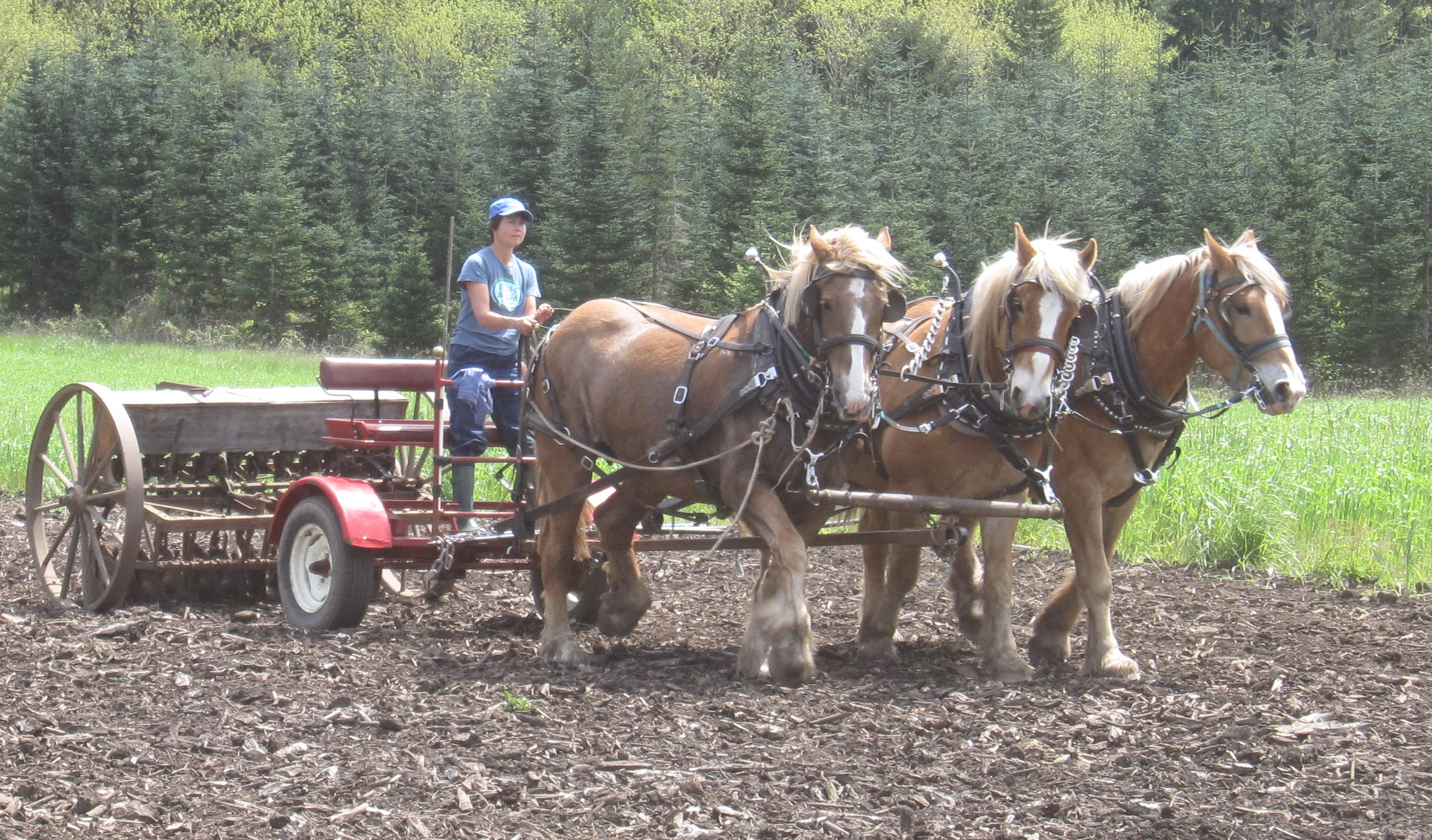 Farming With Draft Horses Workshop Oregon The Irresistible Fleet Of Bicycles