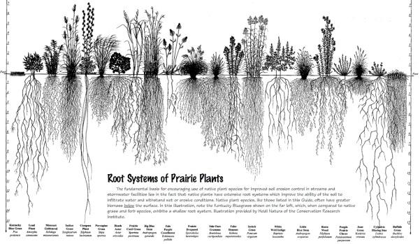 prairierootsystems-2