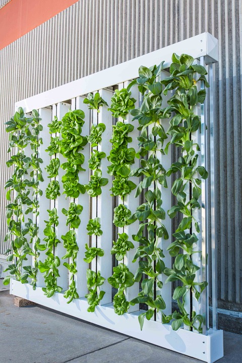 vertical-farm-916337_960_720
