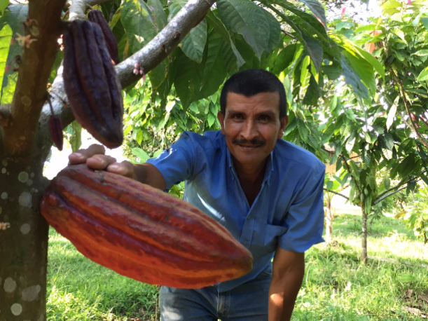 cacao-seed