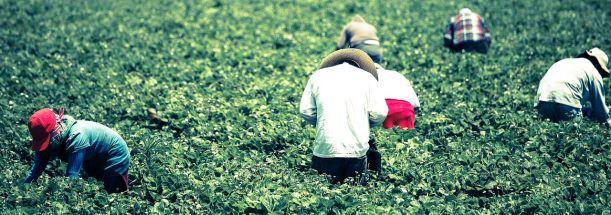 CA Fruit Picking