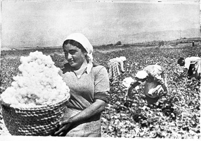 Cotton Farmers
