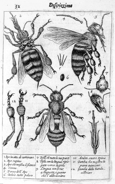L0008282 The drawings of a bee and its parts.