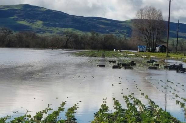 happy boy farms flood