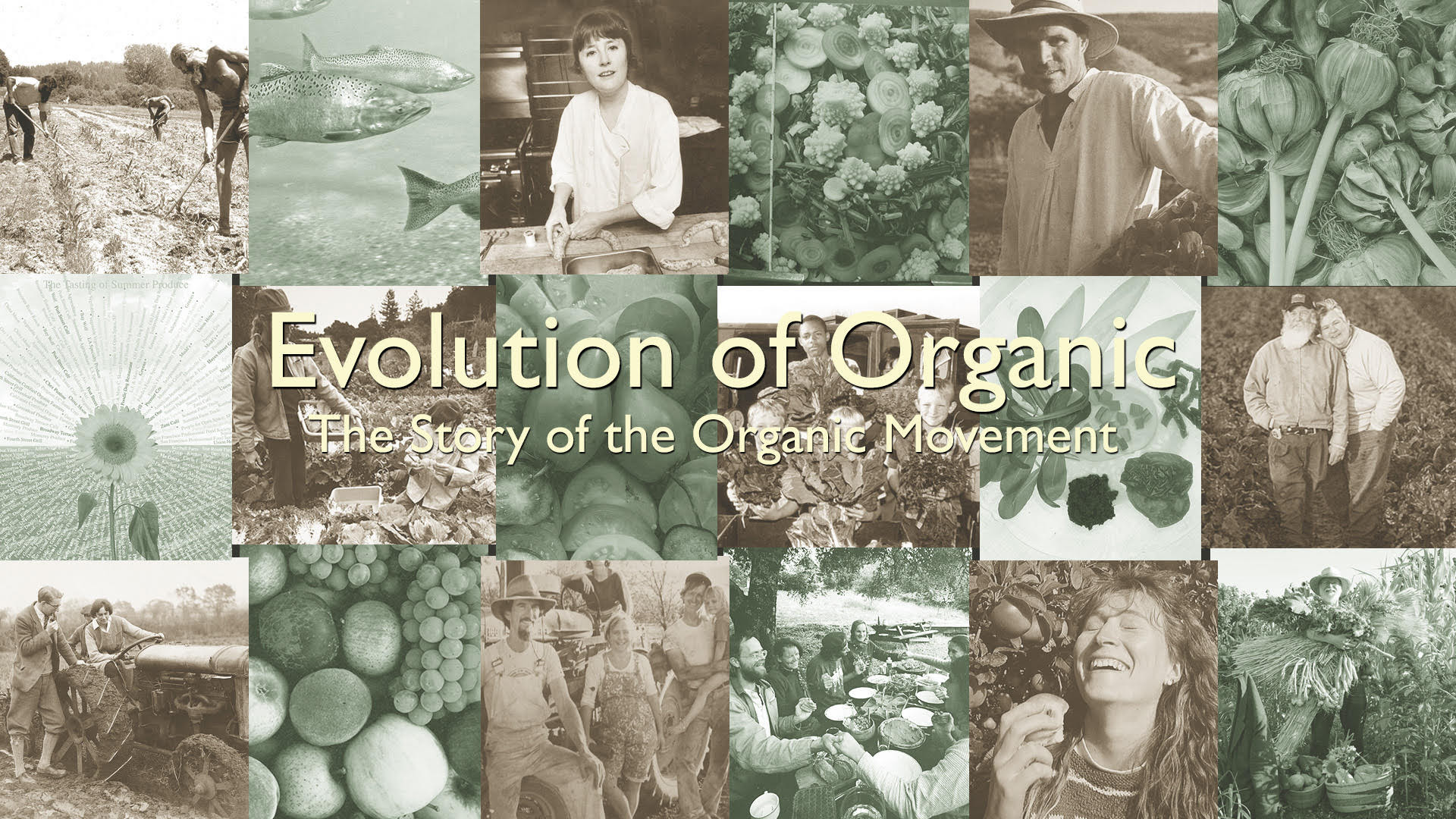 the evolution of organic farming Organic agriculture an organic farmer this became a worldwide movement, and organic farming is now practiced in most countries see also.