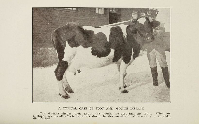The_farmer's_veterinarian_BHL20172818
